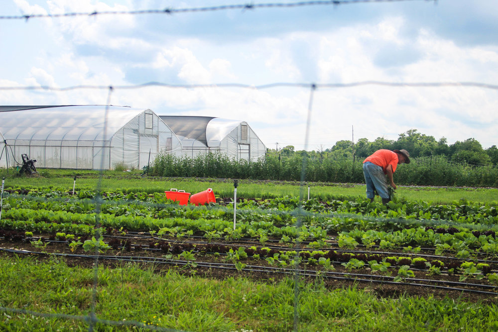 Farmers/Artisans -
