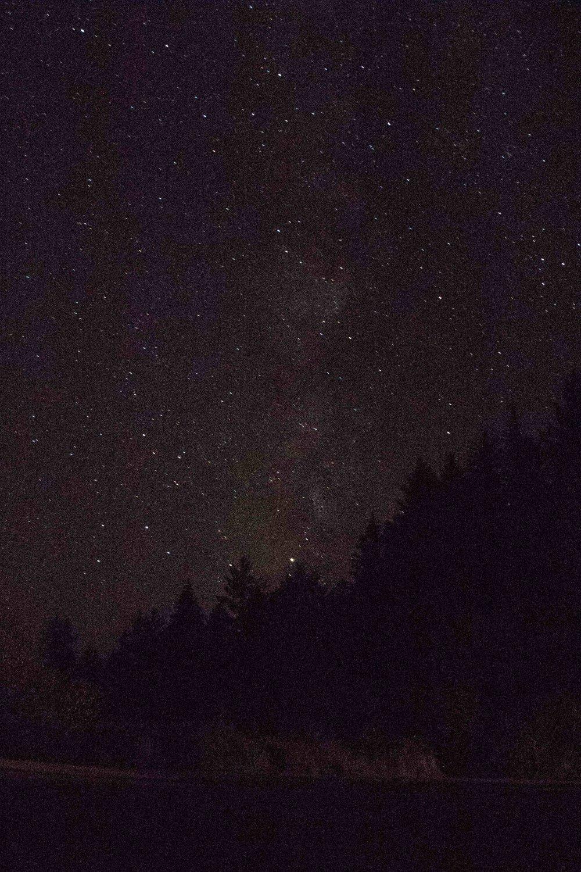 2018_Redwood_day2-3.jpg