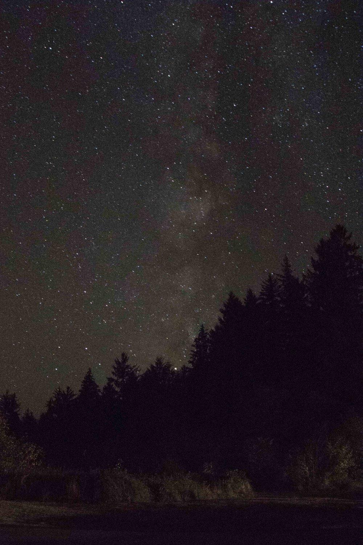 2018_Redwood_day2-6.jpg