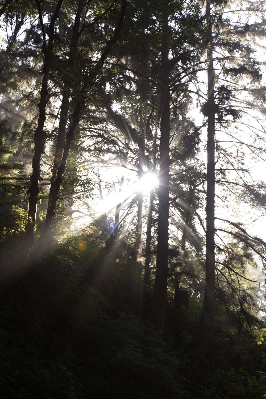 2018_Redwood_day2-45.jpg