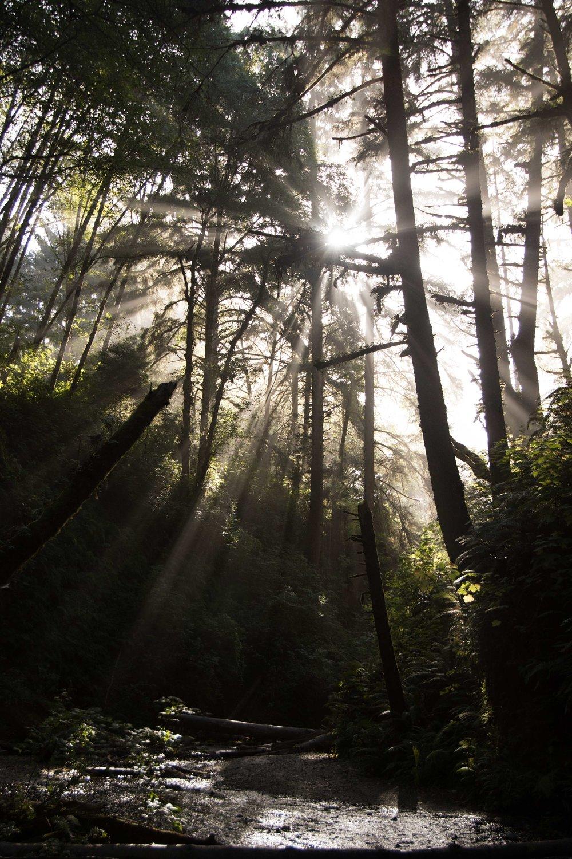 2018_Redwood_day2-57.jpg