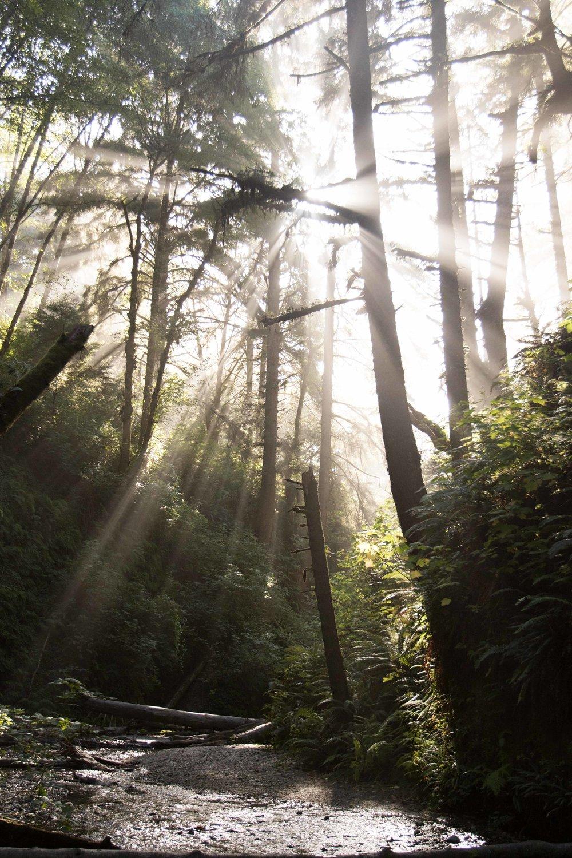 2018_Redwood_day2-61.jpg