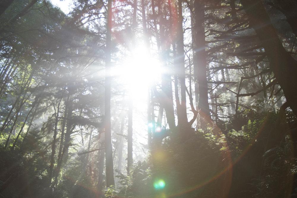2018_Redwood_day2-62.jpg