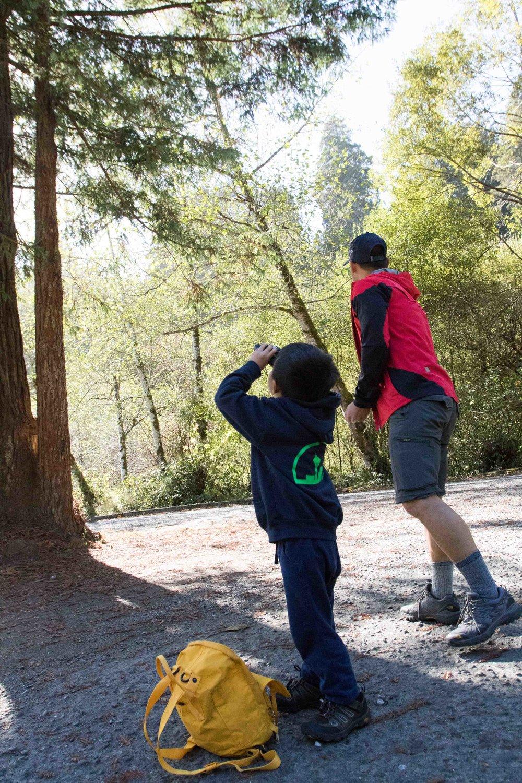 2018_Redwood_day3-12.jpg