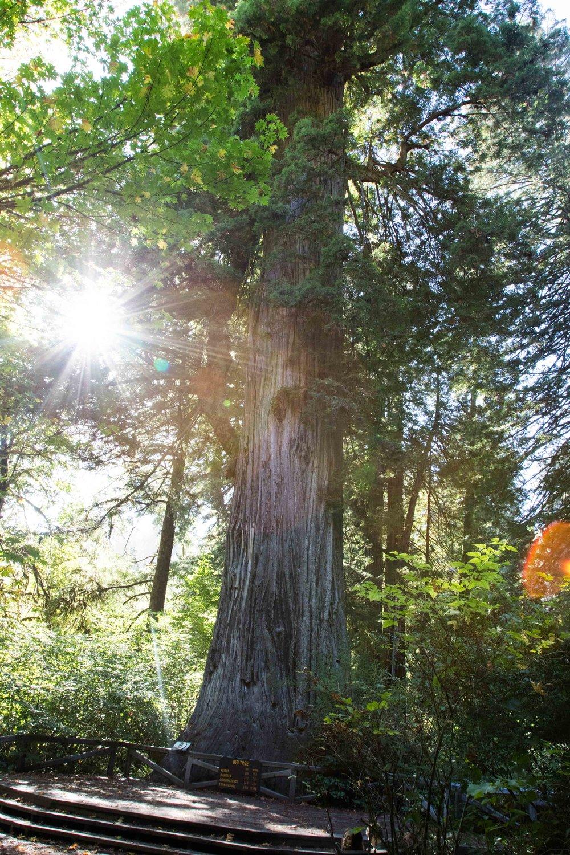 2018_Redwood_day3-19.jpg