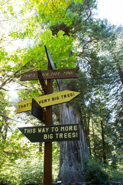 2018_Redwood_day3-20.jpg