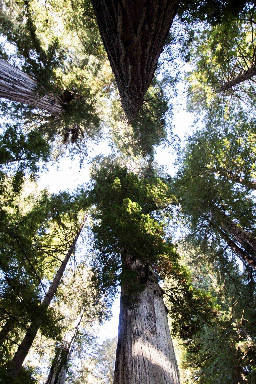 2018_Redwood_day3-23.jpg