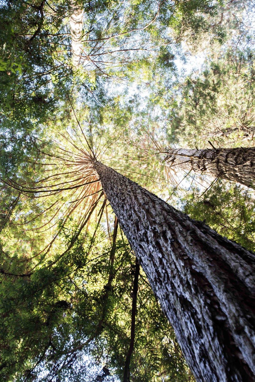 2018_Redwood_day3-24.jpg