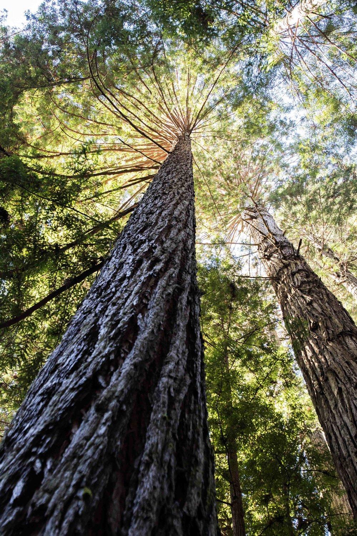 2018_Redwood_day3-25.jpg