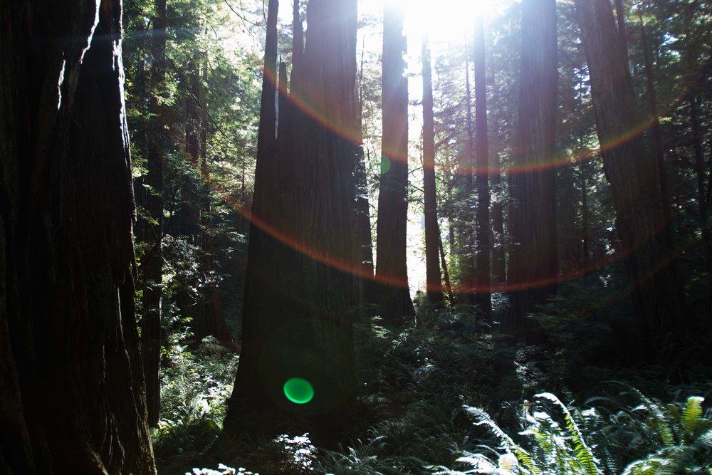 2018_Redwood_day3-29.jpg