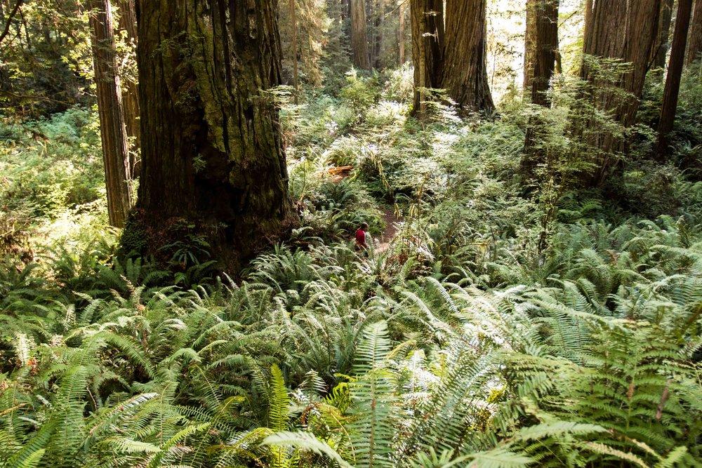 2018_Redwood_day3-30.jpg