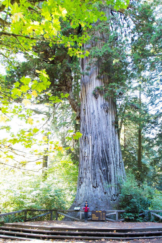 2018_Redwood_day3-37.jpg