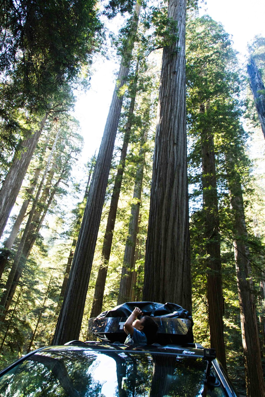 2018_Redwood-22.jpg