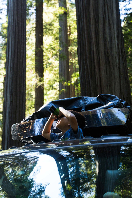 2018_Redwood-23.jpg