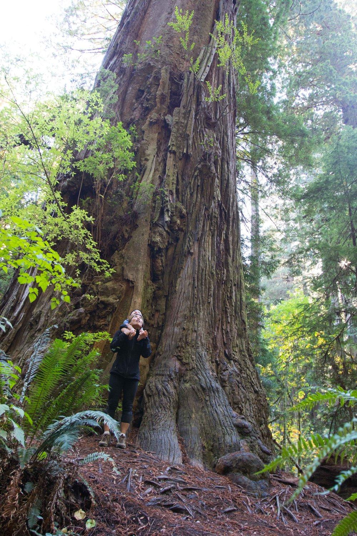 2018_Redwood-33.jpg