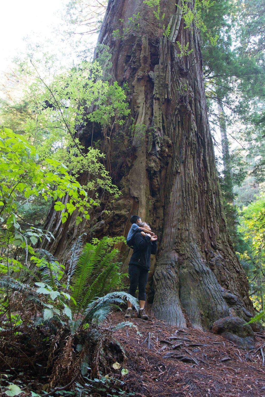 2018_Redwood-34.jpg