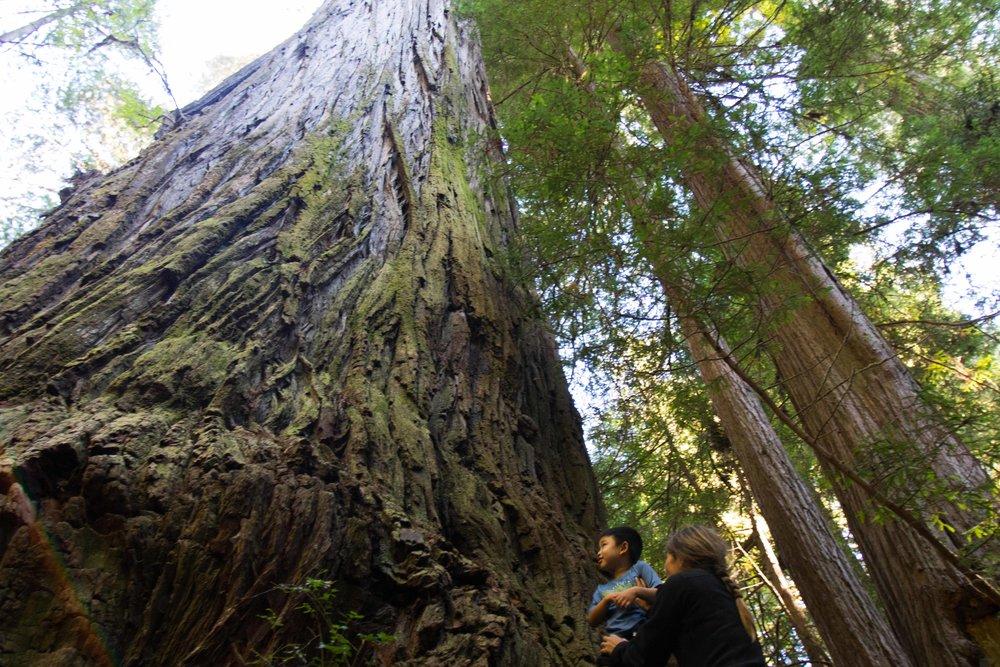 2018_Redwood-35.jpg