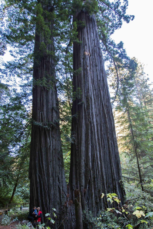 2018_Redwood-36.jpg