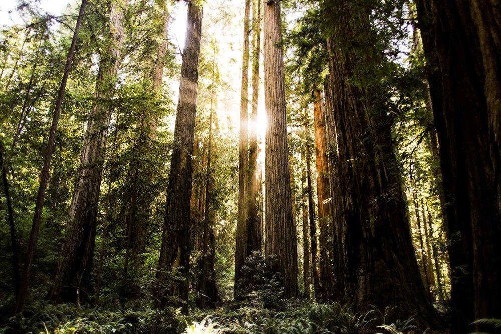 2018_Redwood-49.jpg