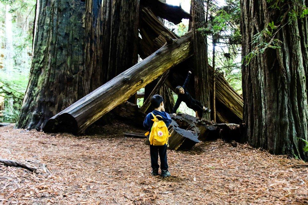 2018_Redwood-50.jpg