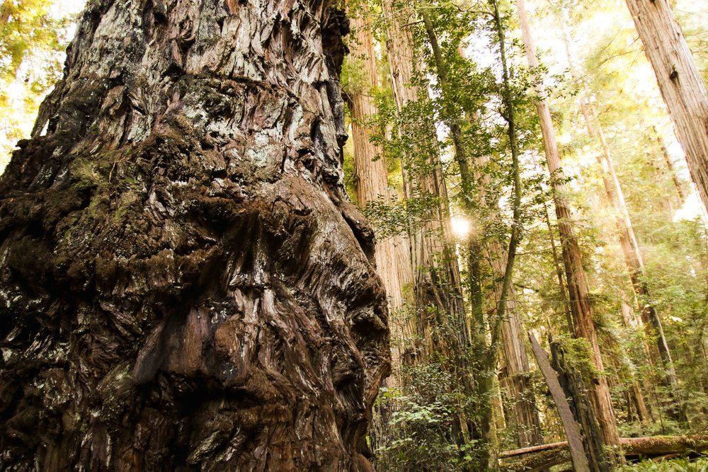 2018_Redwood-52.jpg