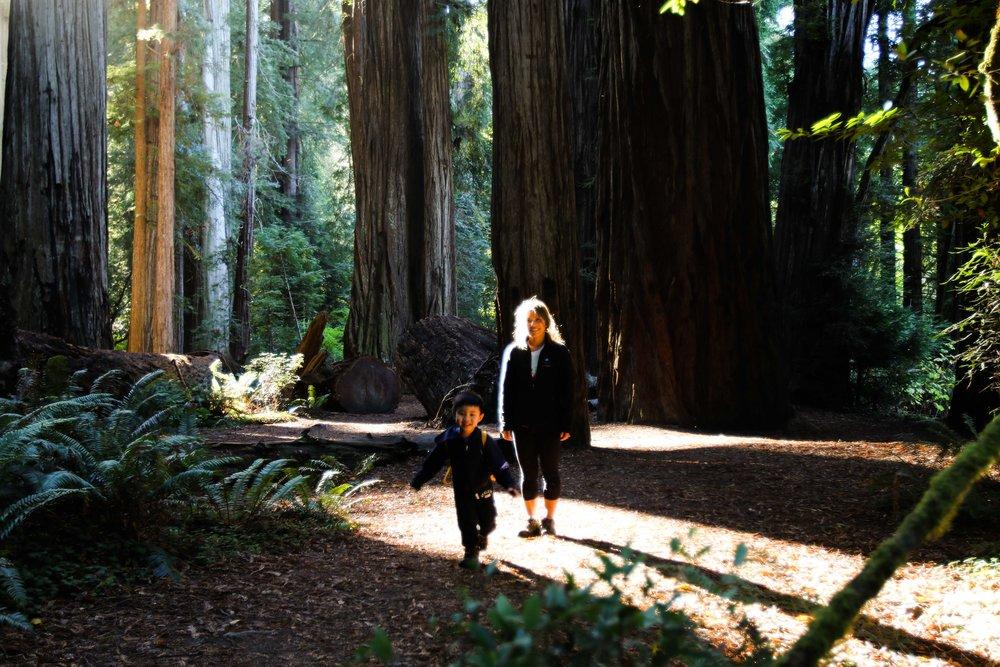 2018_Redwood-56.jpg