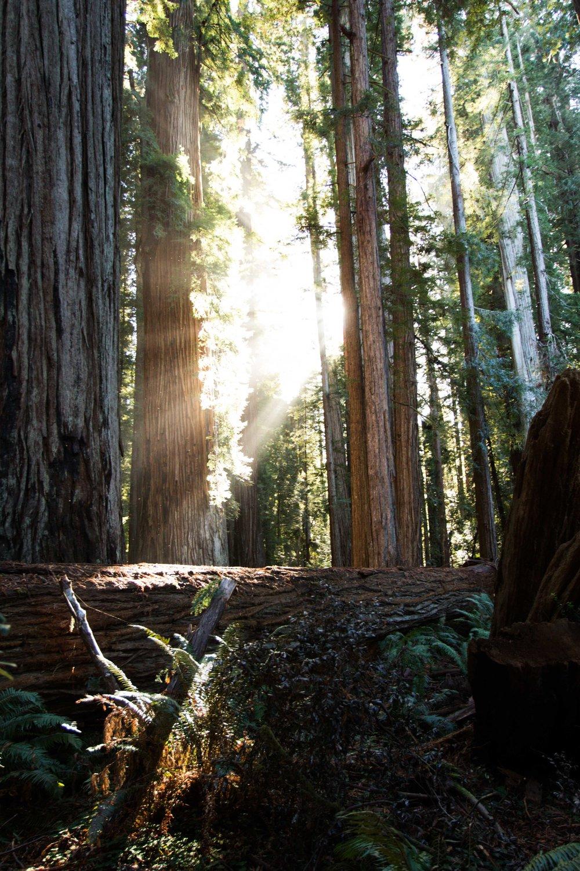 2018_Redwood-62.jpg
