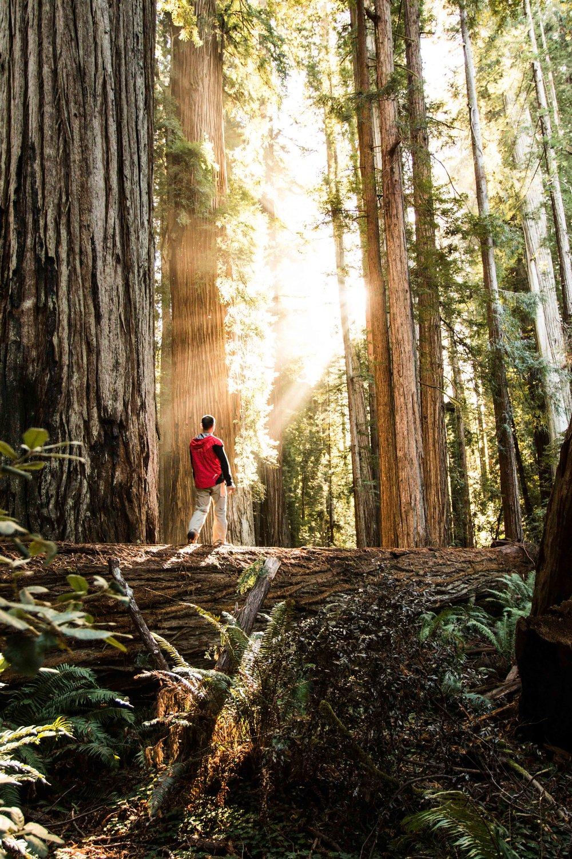 2018_Redwood-63.jpg