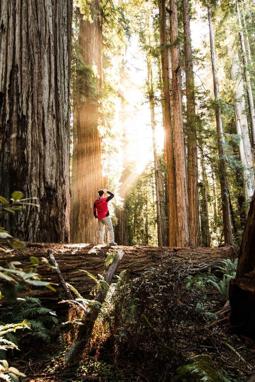 2018_Redwood-64.jpg