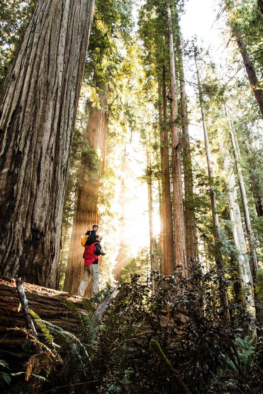 2018_Redwood-65.jpg