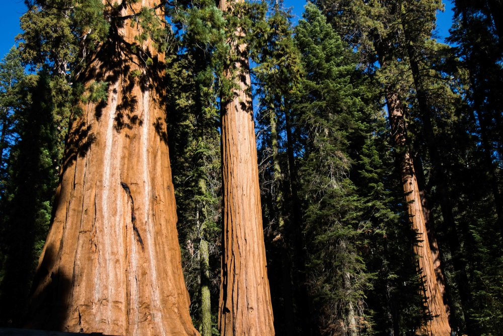 Sequoia - National ParK