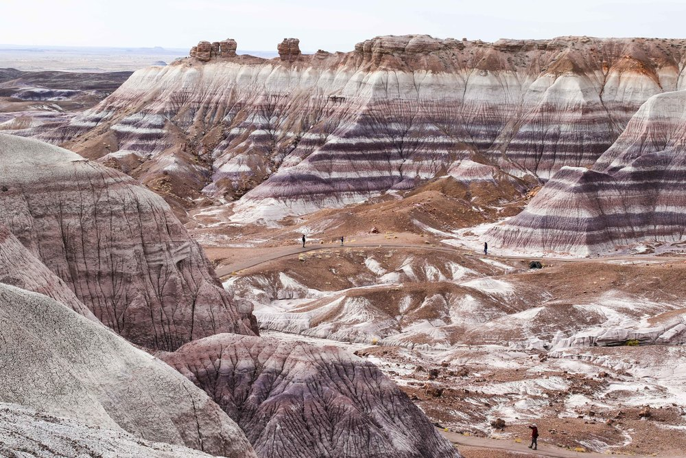 Petrified Forest - National Park