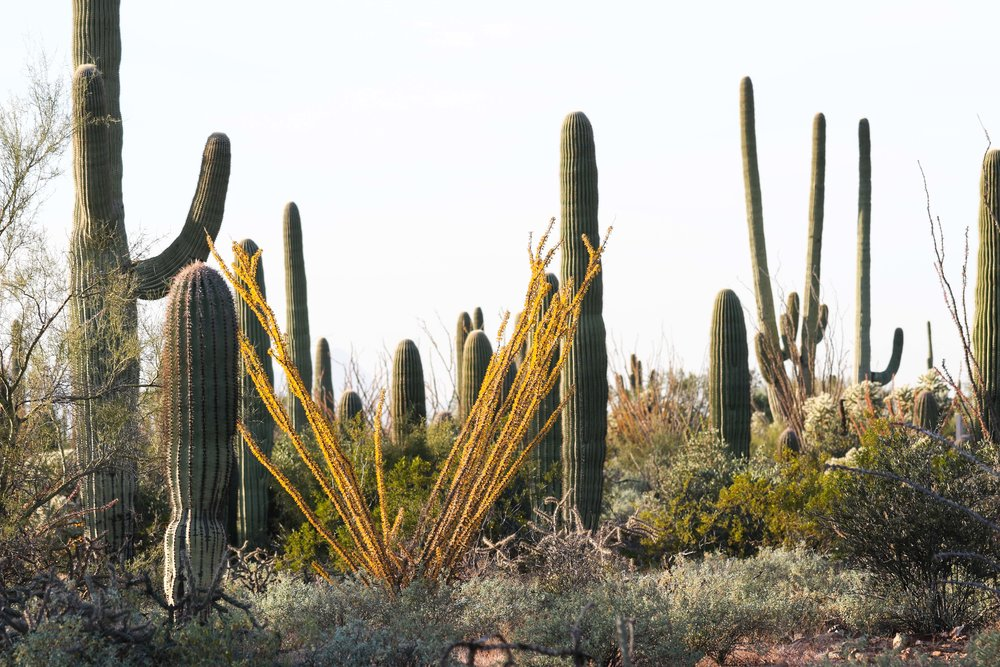 2018_Saguaro-7.jpg