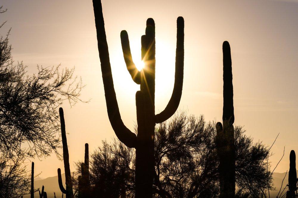 2018_Saguaro-9.jpg