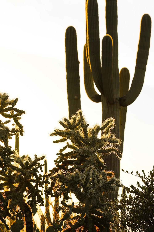 2018_Saguaro-14.jpg