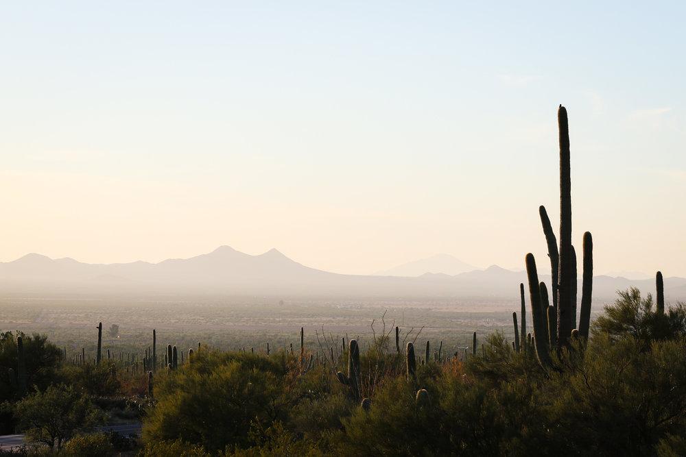 2018_Saguaro-23.jpg