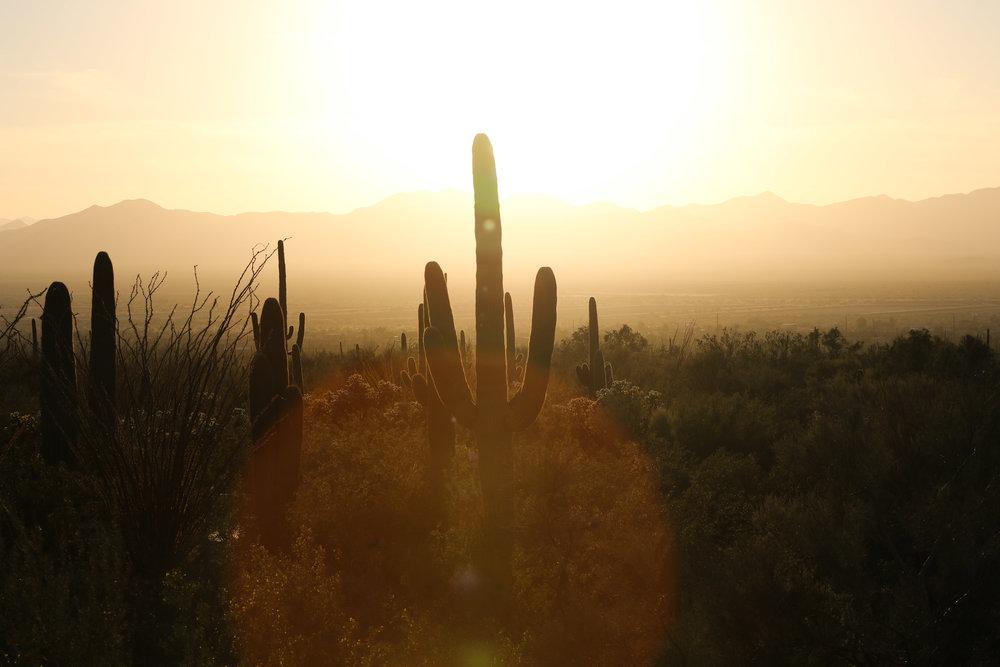 2018_Saguaro-26.jpg