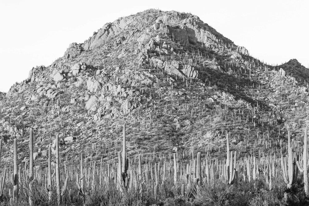 2018_Saguaro-29.jpg