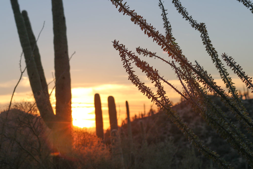 2018_Saguaro-41.jpg