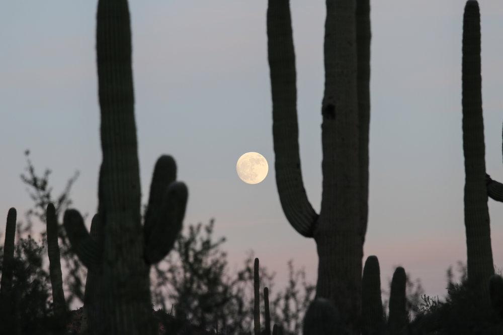 2018_Saguaro-43.jpg