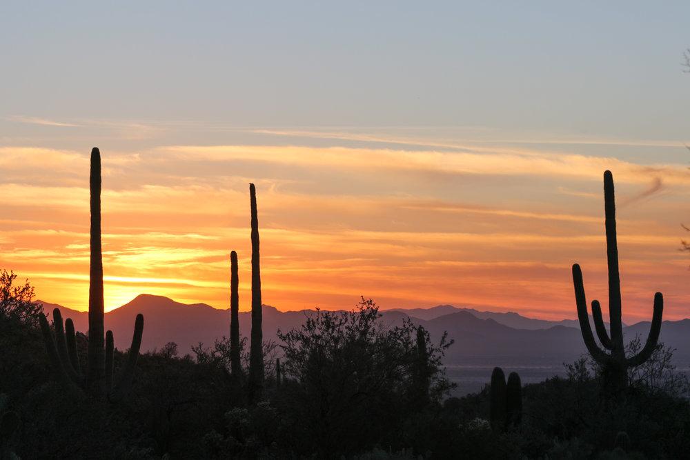 2018_Saguaro-45.jpg