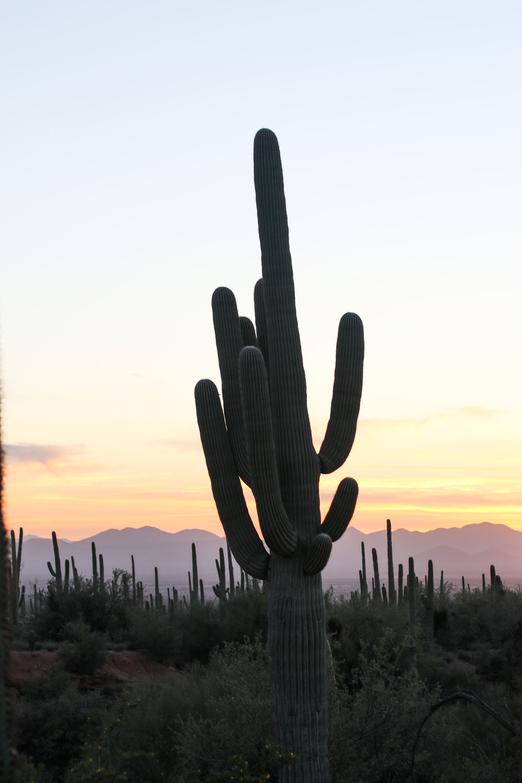 2018_Saguaro-52.jpg