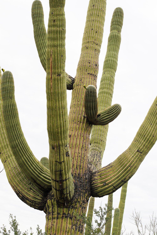 2018_Saguaro-118.jpg