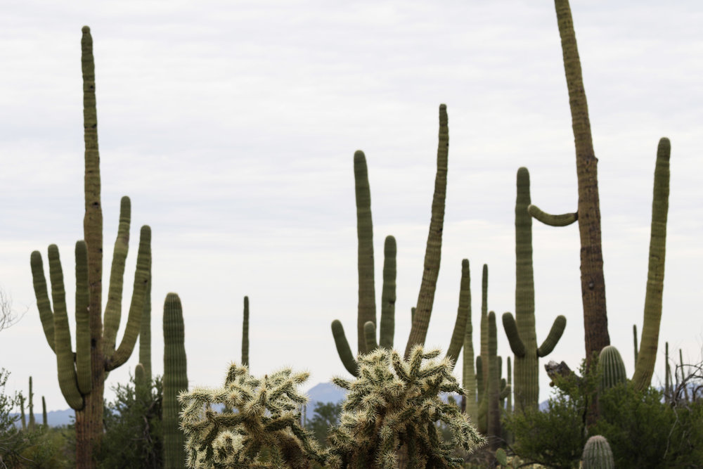 2018_Saguaro-142.jpg