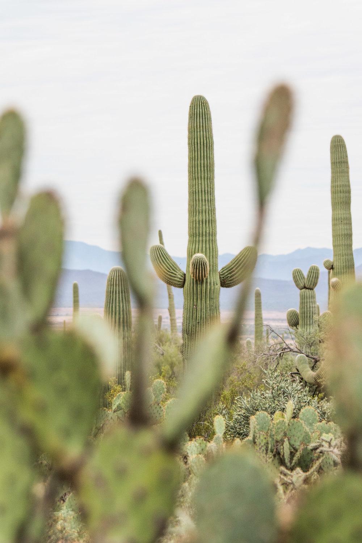 2018_Saguaro-160.jpg