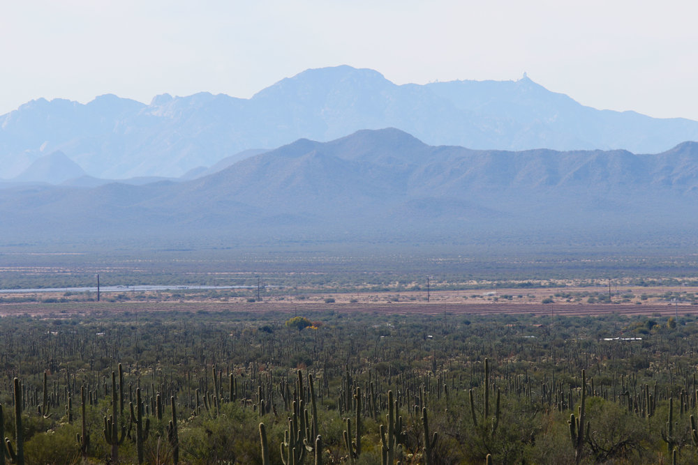 2018_Saguaro-320.jpg