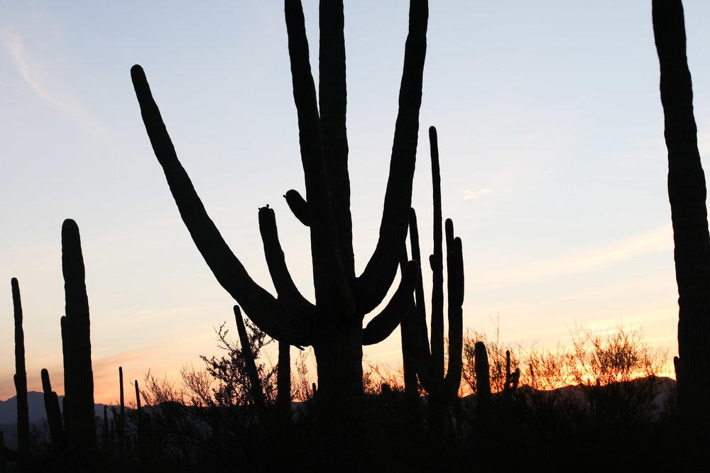 2018_Saguaro-447.jpg