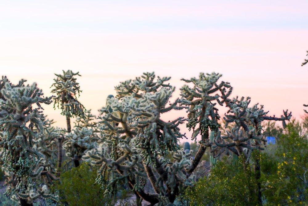 2018_Saguaro-449.jpg