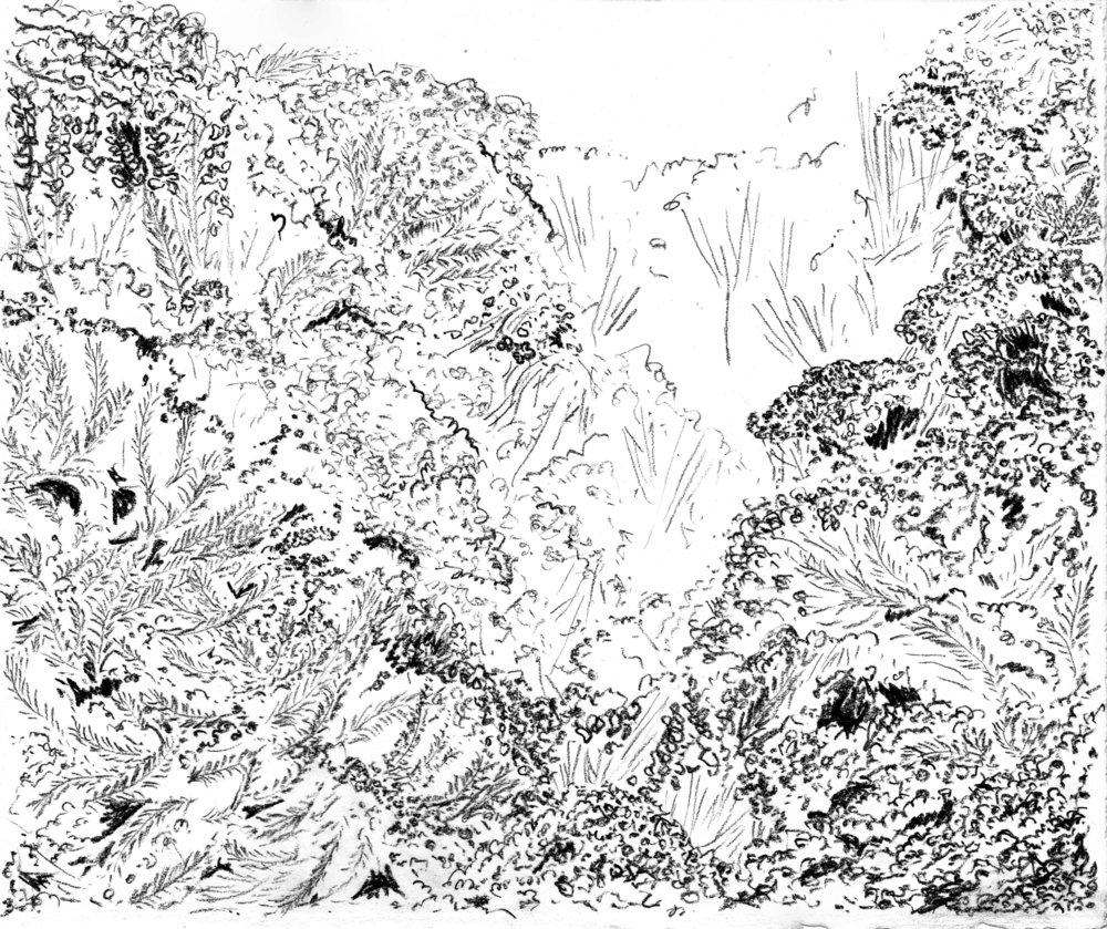Native Plant Sketch.jpg