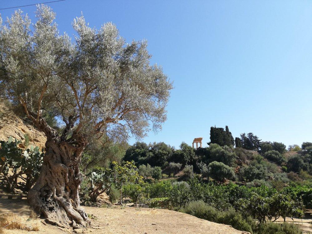 Vue depuis le jardin de Kolymbethra